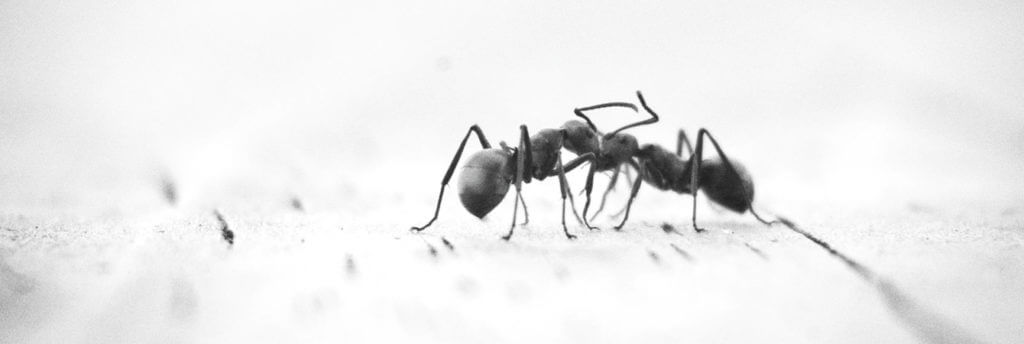 ant species and how to deal with them