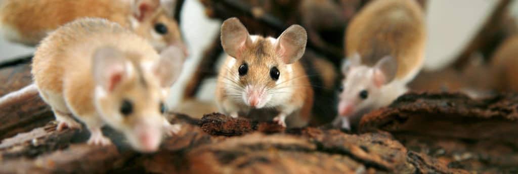 prevent mice infestation