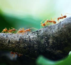 Ant Control Toronto GTA