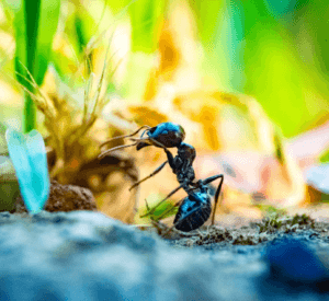 Ant Removal Toronto