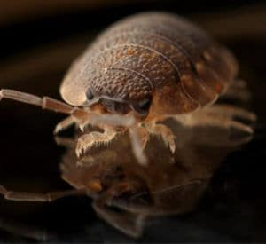Pest Control Toronto - Bed Bug Exterminators