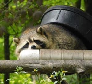 Humane Wildlife Control Toronto
