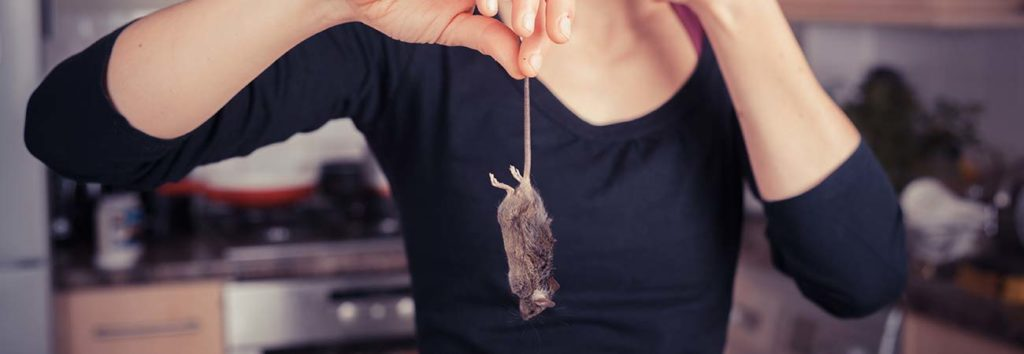 Why Diy Mice Control Is Rarely Successful