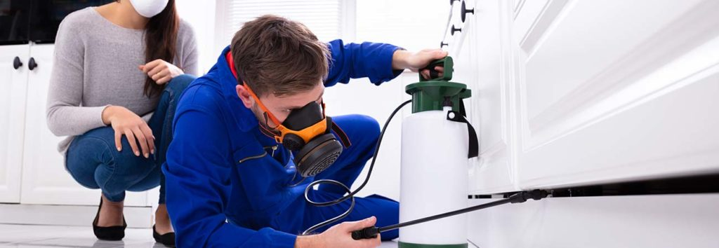 Why Professional Pest Control Is A Great Idea For Your Toronto Home