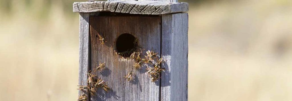 why is it essential to eliminate wasp nests from your home in kitchener