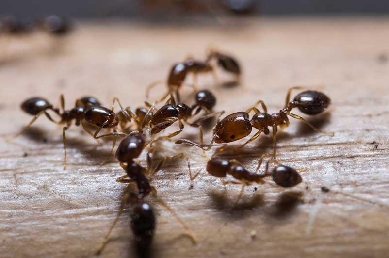ant removal in kitchener