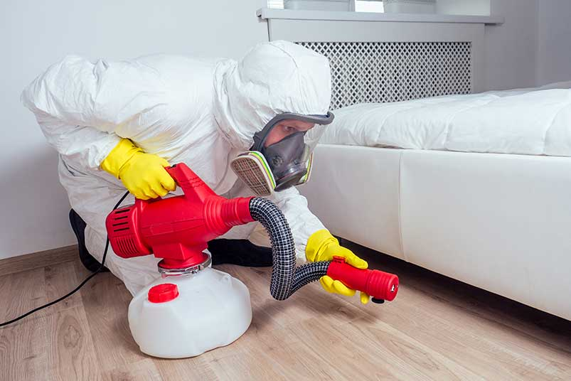 bed bug chemical treatment kitchener
