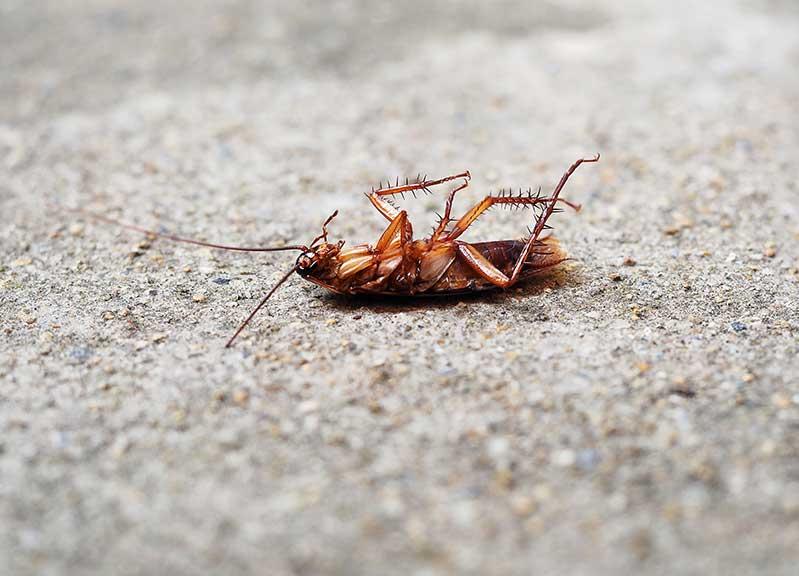 cockroach control Kitchener