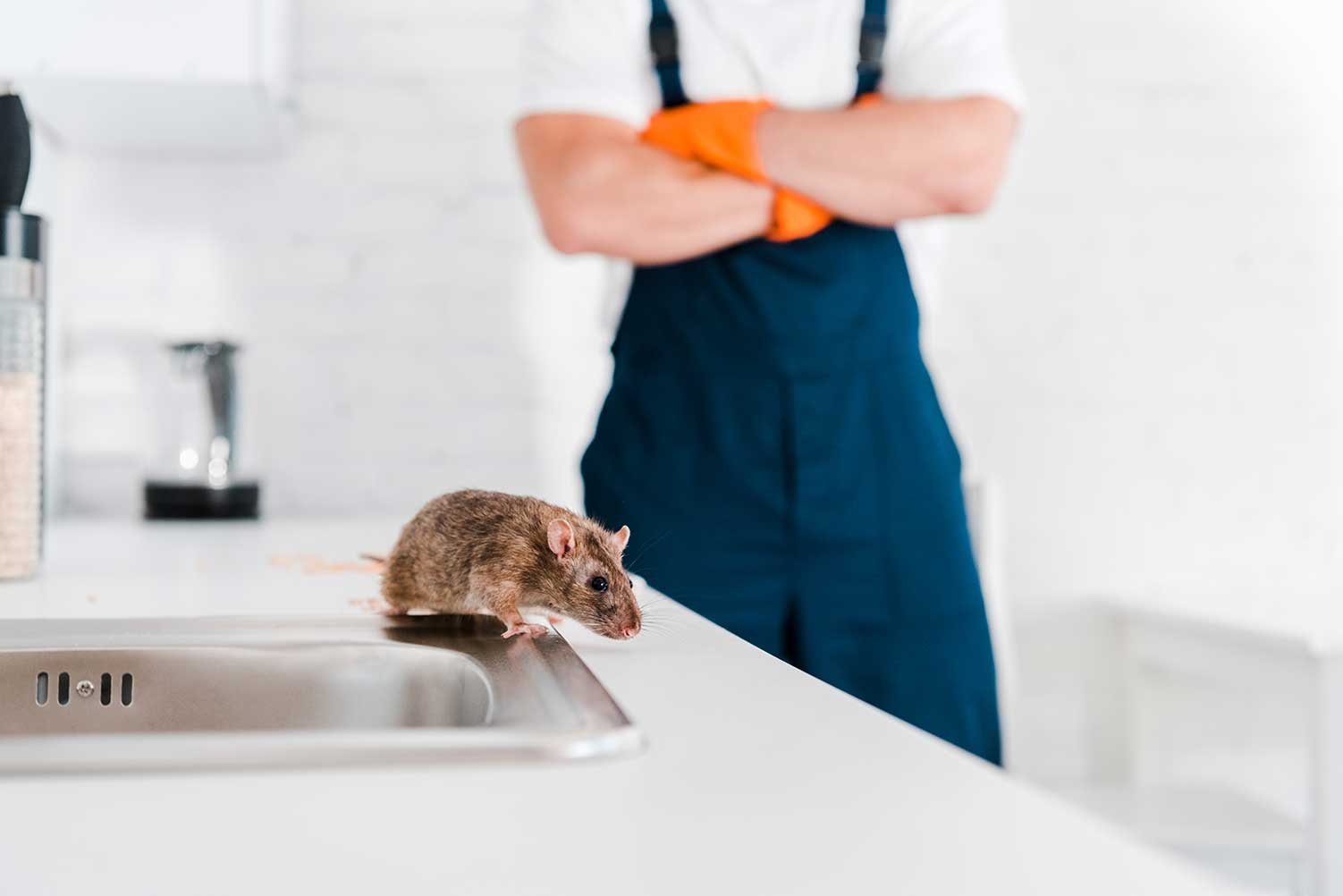 mice removal Guelph