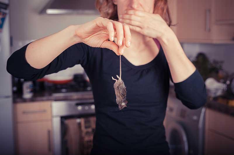 mice removal kitchener