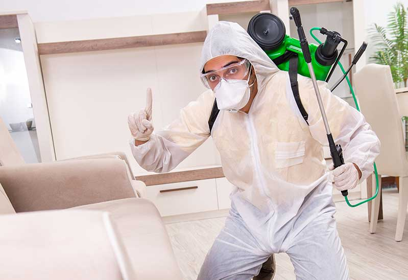 pest control inspection kitchener