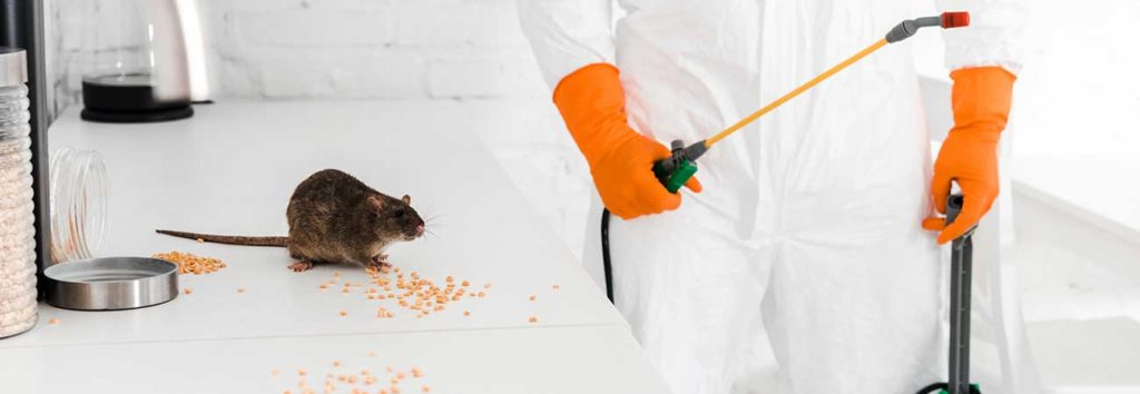 professional rodent control methods in kitchener