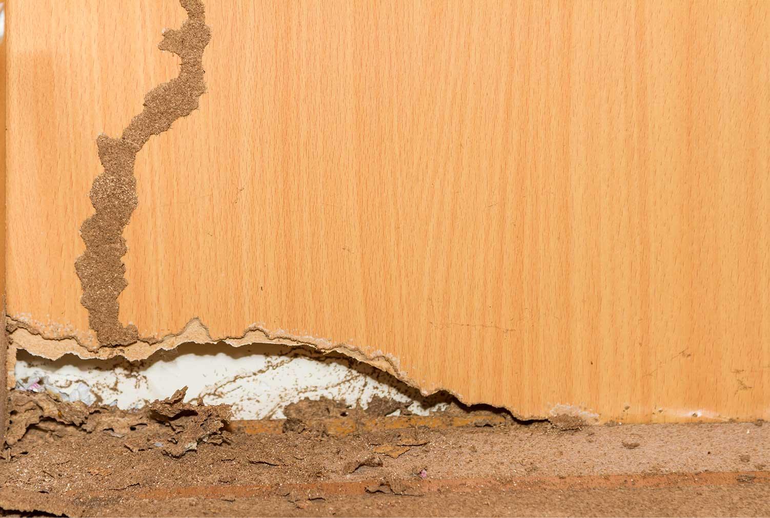 termite control Kitchener