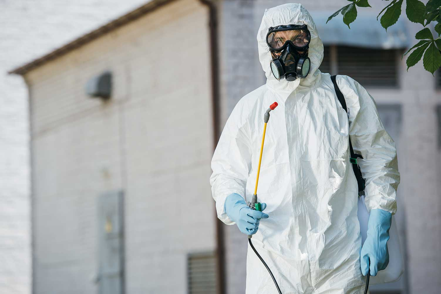 wasp nest removal experts in Kitchener