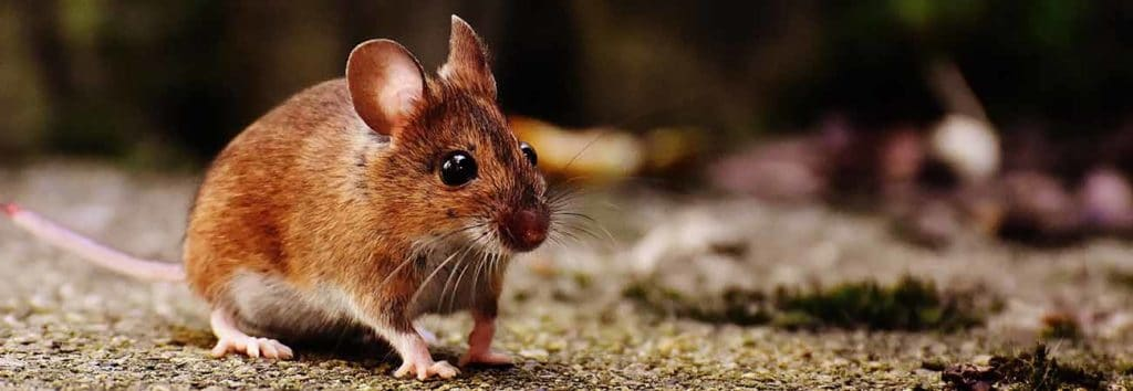 common mouse trap mistakes and how to avoid them
