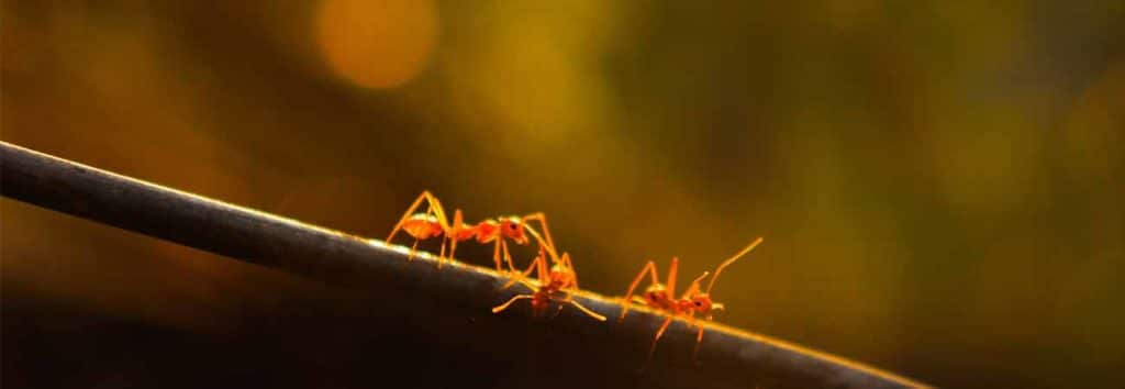 dos and don'ts if you have carpenter ants in your house