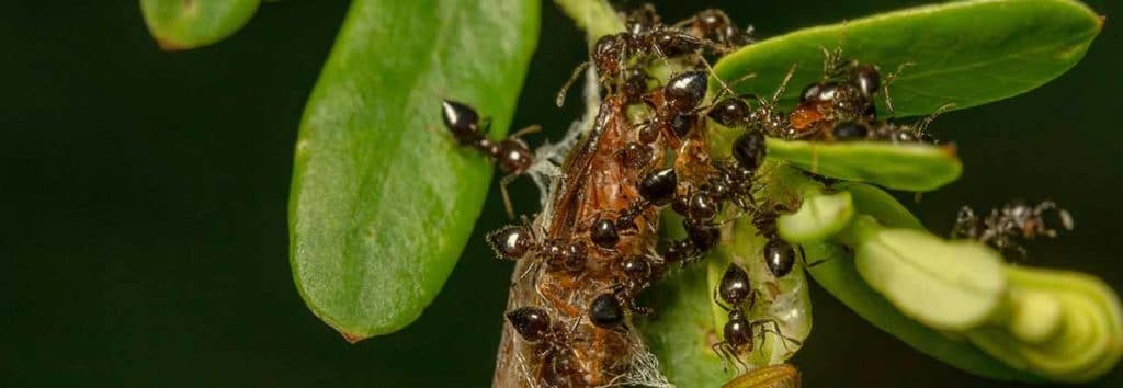 what happens to carpenter ants in winter