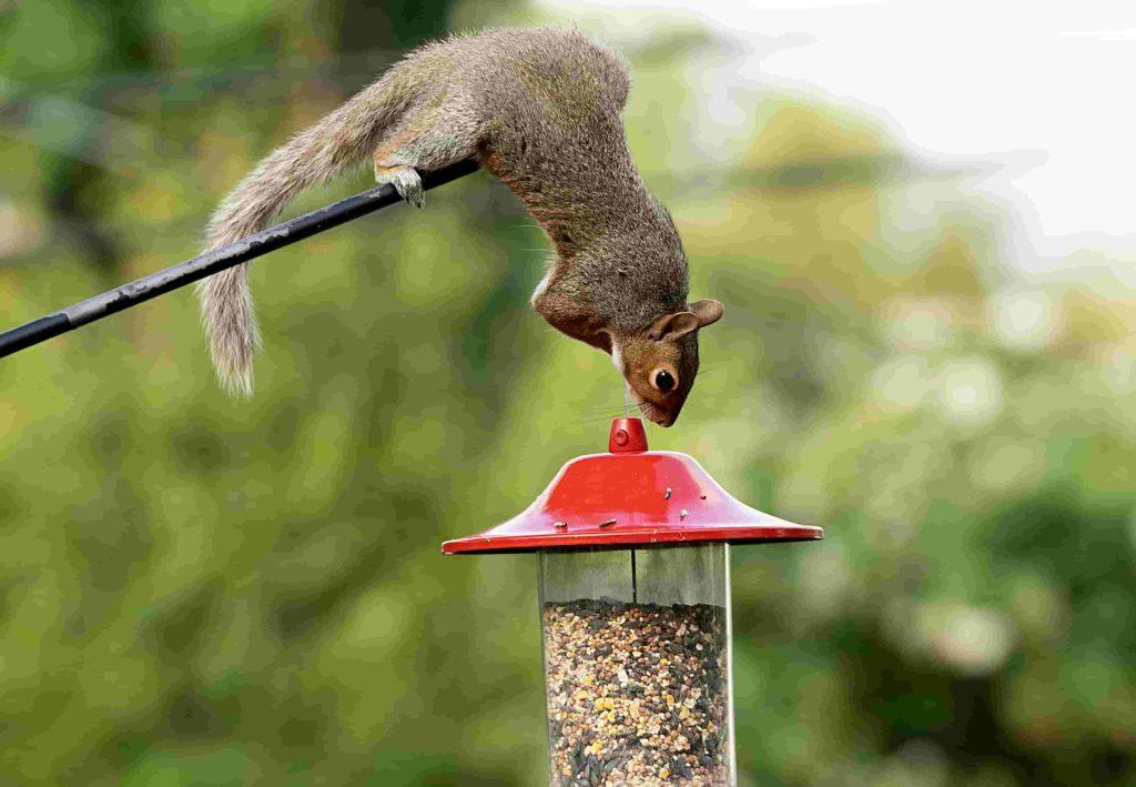 how do you make a squirrel proof bird feeder