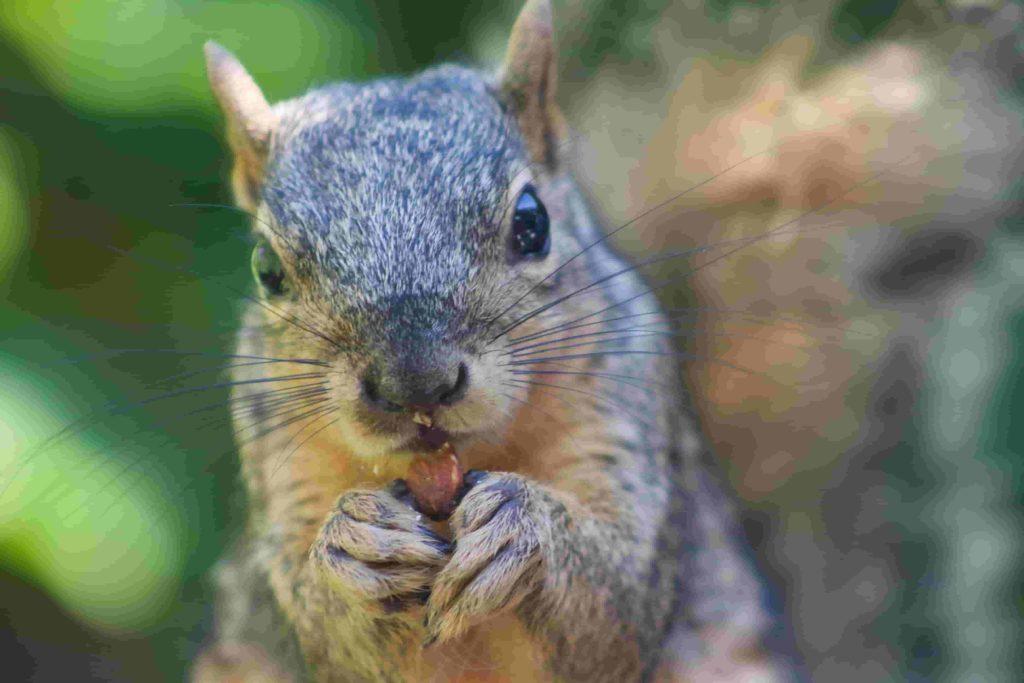 best ways to repel squirrels
