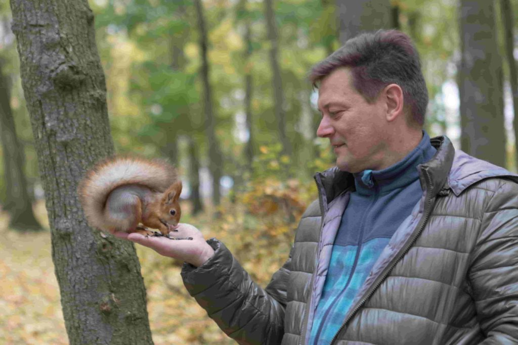 can squirrels cause harm to humans