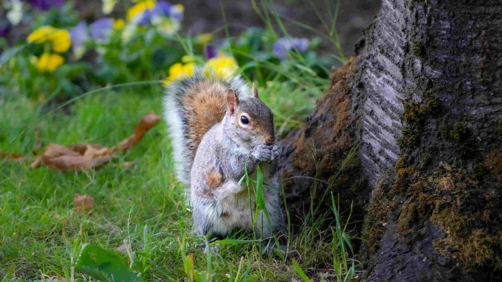 how to keep squirrels out of your garden in toronto