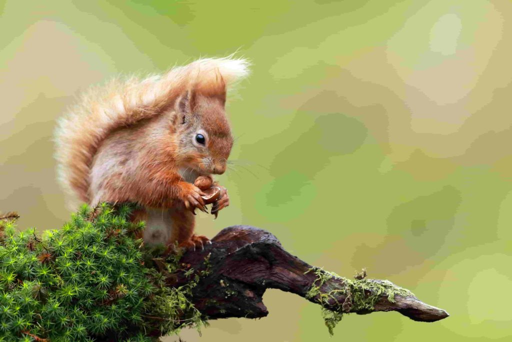 know your squirrels in toronto