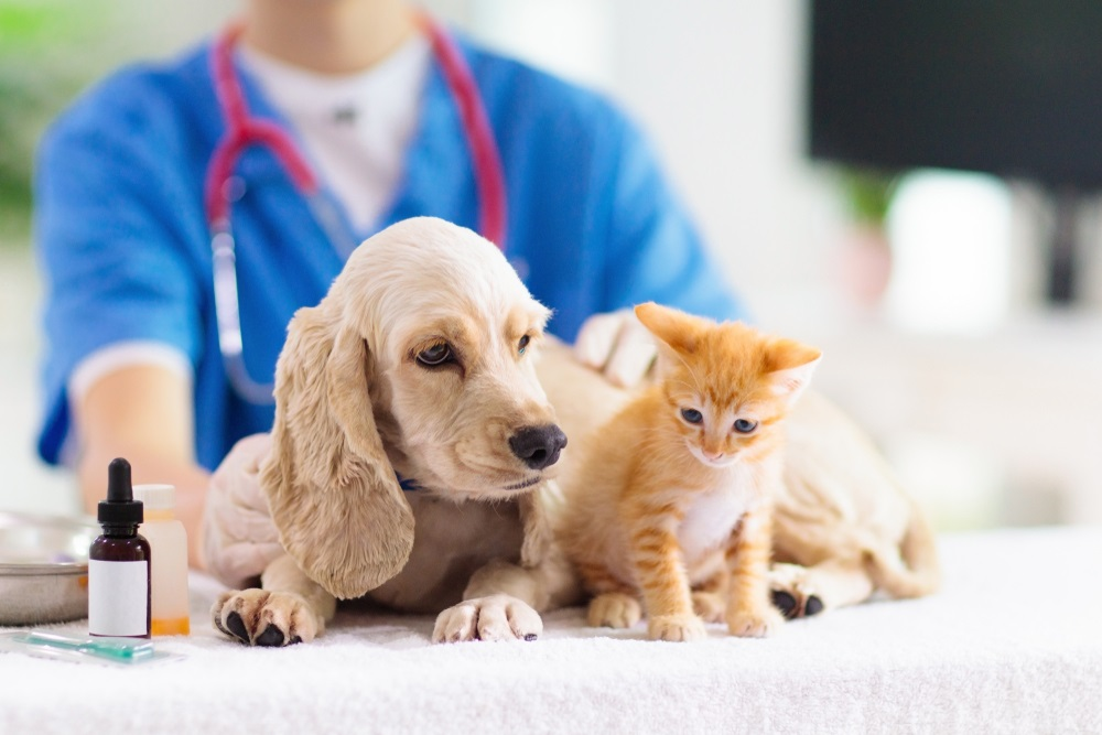 Is Pest Control Safe for Pets?
