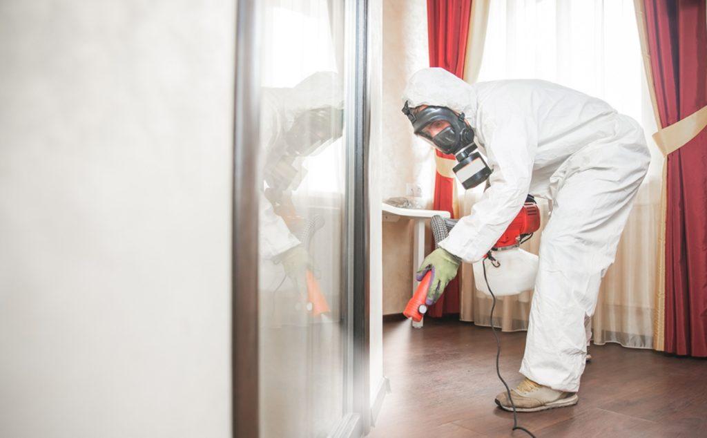 Is Indoor Pest Control Safe for Pets in Kitchener?