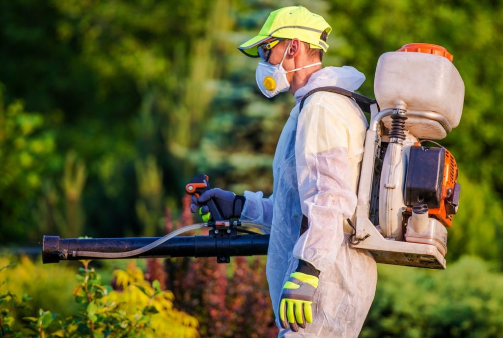 When is the Best Time for Pest Control Treatment in Kitchener?