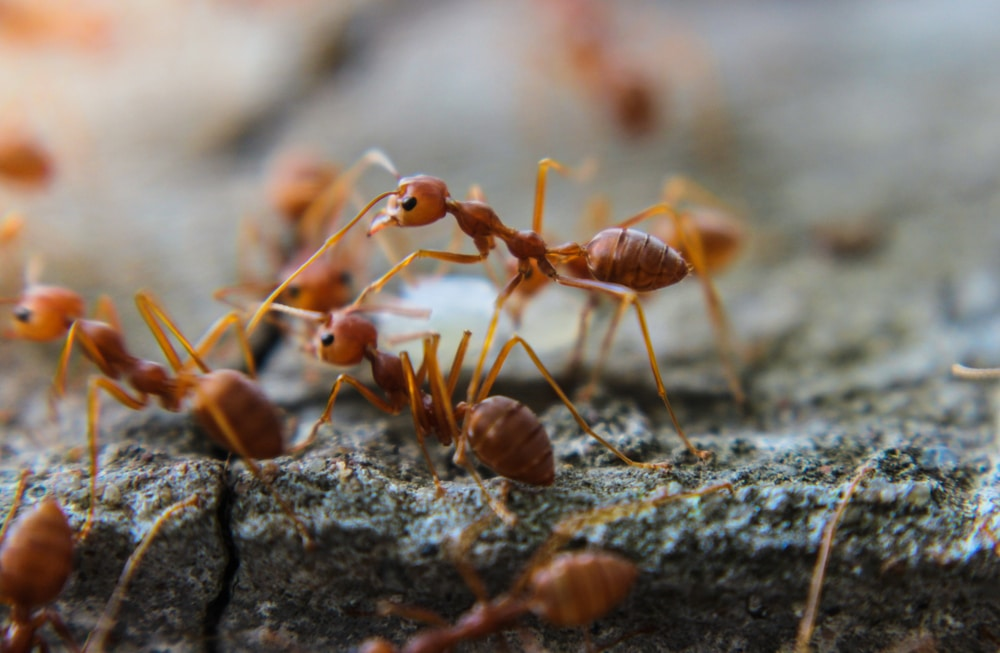 What Diseases Do Ants Carry in Mississauga?