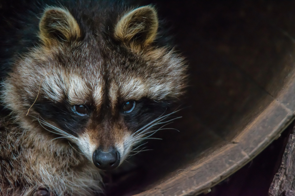 3 Animals That Could Be Living in Your Chimney in Toronto