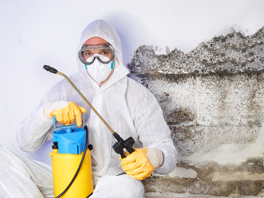The Importance of Choosing Eco-Friendly Termite Control Options in Vaughan