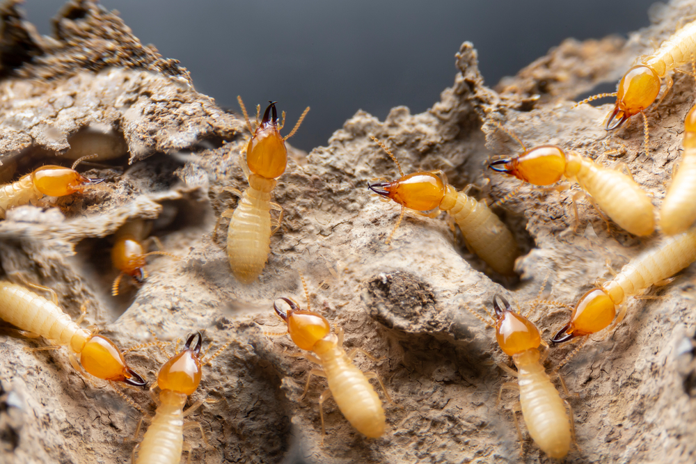 Attracting Termites to Your Home in Guelph