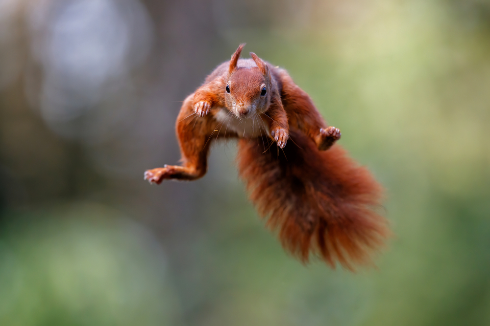 What Type of Squirrels are Common in Toronto?