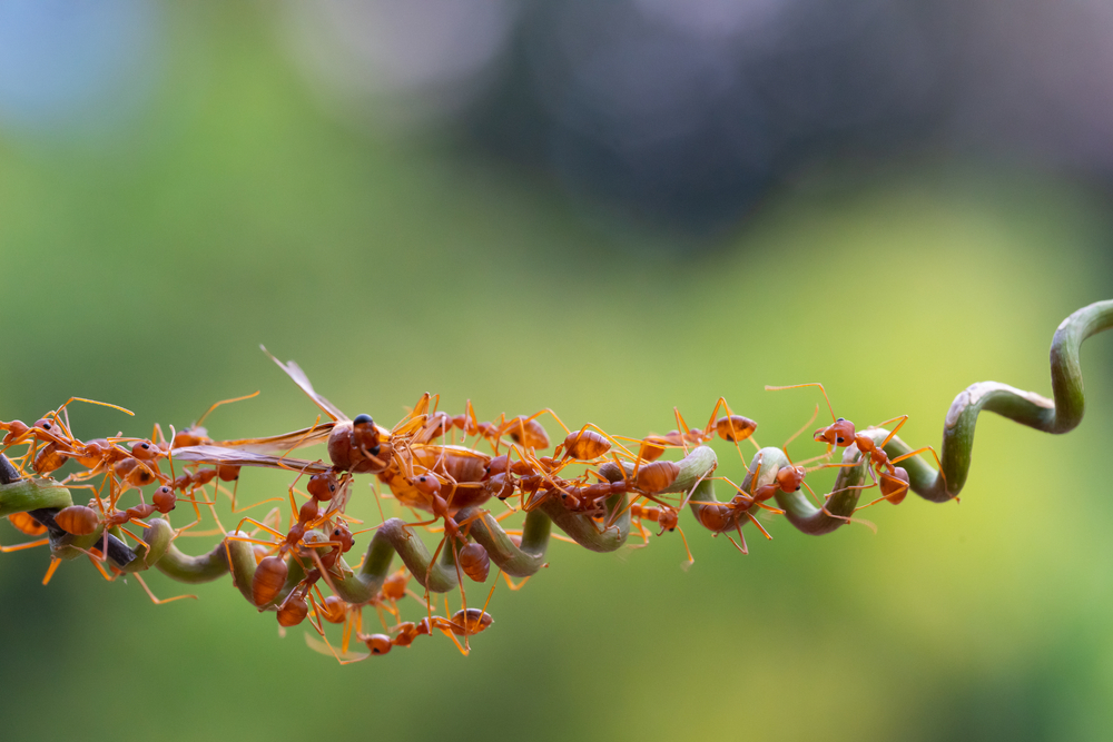How To Check What Type of Ants Are Infesting Your Home in Vaughan?