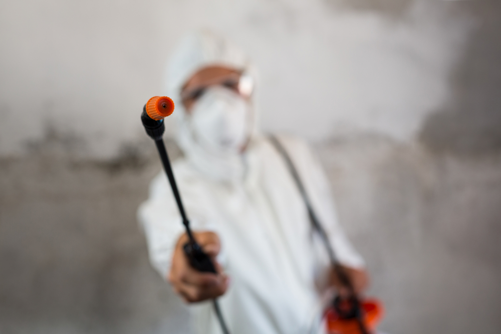 3 Cleaning Tips That Will Keep Away Pests From Your Home in Brampton