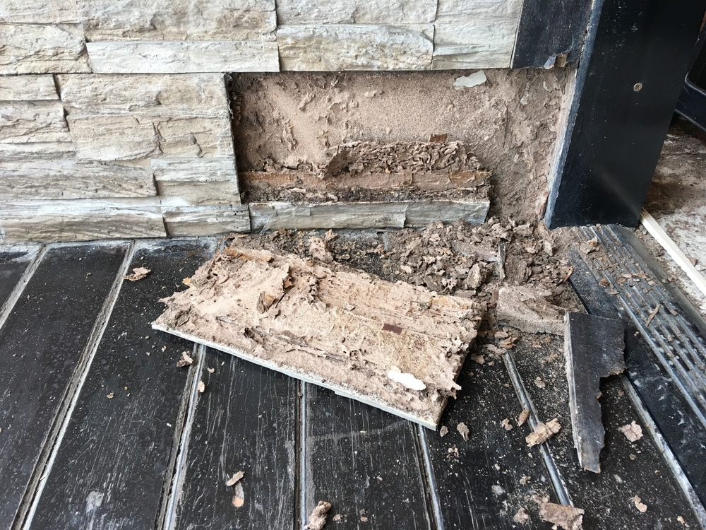 How Quickly Can Termites Damage Your Home in Brampton?