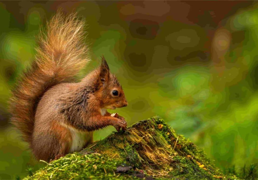 4 ways to keep squirrels off your bird feeders