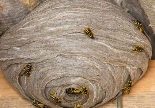 9 facts about wasps you didn't know