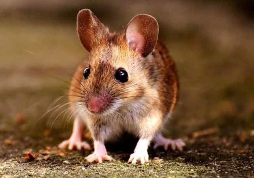 9 interesting facts about rodents