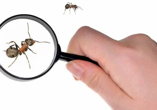 how to get your ant problems resolved in kitchener