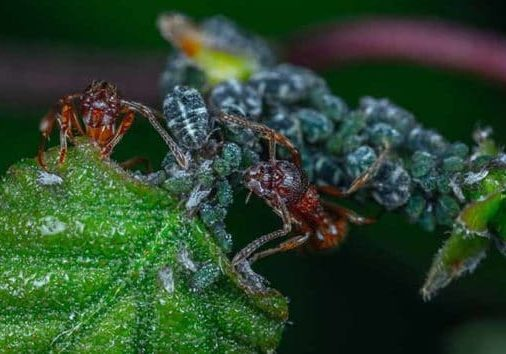pet safe carpenter ants killing methods for homeowners