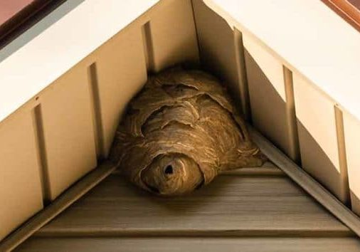 the right way to remove wasp nests in cambridge