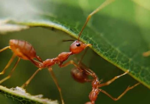 things you may not know about carpenter ants