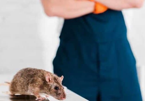 what to look for in a rodent control service in cambridge