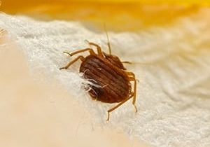 bed bug removal guelph