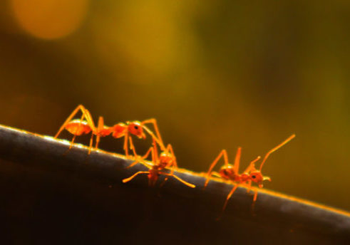 getting control of ants in toronto