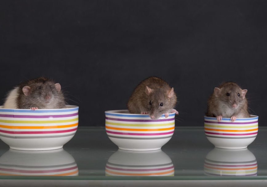 Real Solutions for mice control in Toronto