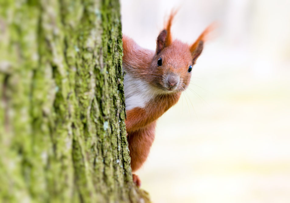 Signs You Have Squirrels in your Home