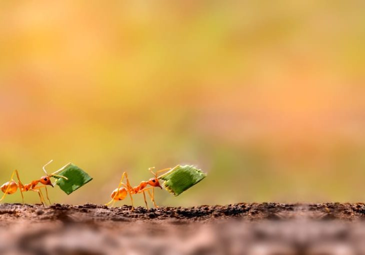 All You Need To Know About What Types of Ants are Common in Brampton?
